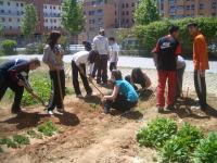 Preparando nuestro huerto, en una actividad dentro del proyecto Ecoescuelas/Comenius